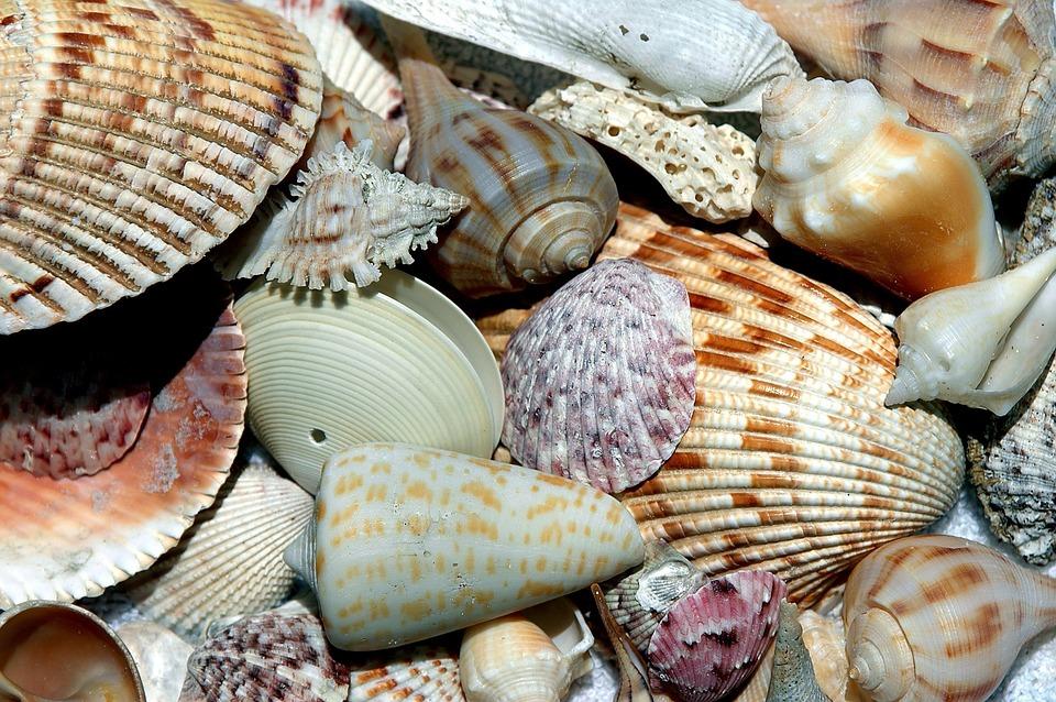 sea-shells-1886613_960_720