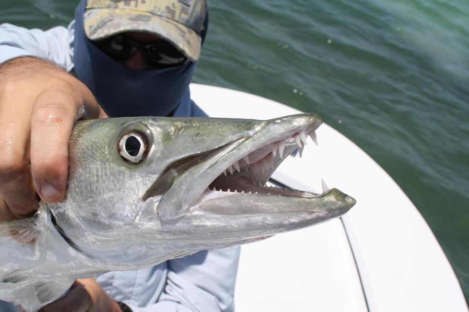 florida fish